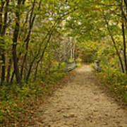 Fall Trail Scene 23 Art Print