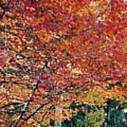 Fall Trees 18 Art Print