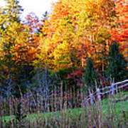 Fall Trees And Fence Art Print
