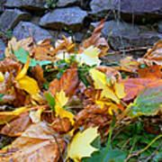 Fallen Leaves  Art Print