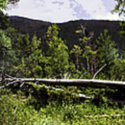 Fallen Tree Art Print
