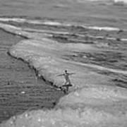 Falling For The Sea Art Print