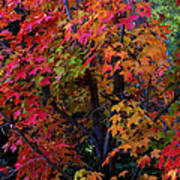 Falls Fiery Rainbow Art Print