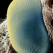 False-colour Sem Of A Hover Fly's Eye Art Print by Dr Jeremy Burgess