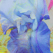 Fanciful Flowers - Iris Art Print