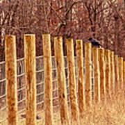 Farm Fence And Birds Art Print