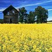 Farm House And Canola Field, Holland Art Print