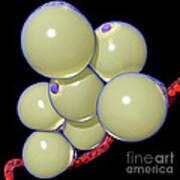 Fat Cells Art Print