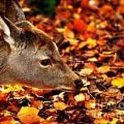 Fawn In Autumn Art Print