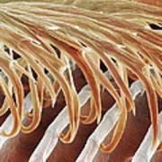 Feather Barbules, Sem Art Print