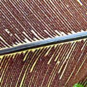 Feather Or Fern Art Print