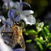 Feeding Bee Art Print