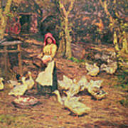 Feeding The Ducks Art Print