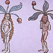 Female And Male Mandrake, Alchemy Plant Art Print