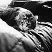 Female Cat Laying Down Art Print