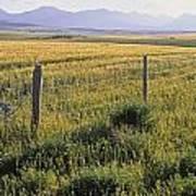 Fence And Barley Crop, Near Waterton Art Print