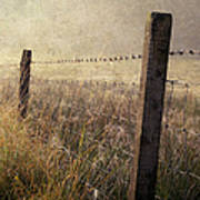 Fence And Field. Trossachs National Park. Scotland Art Print