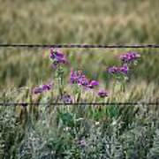 Fence And Flowers Art Print
