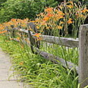 Fence Of Flowers Art Print