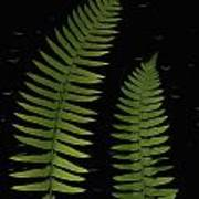 Fern Leaves With Water Droplets Art Print