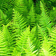 Ferns Galore Filtered Art Print