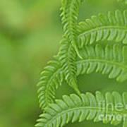Ferns Take A Bow Art Print