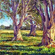 Ficus Trees Art Print