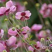 Field Of Japanese Anemones Art Print