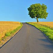 Field Path With Walnut Tree Art Print
