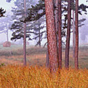 Field Pines And Fog In Shannon County Missouri Art Print