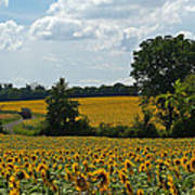 Fields Of Sunflowers Art Print