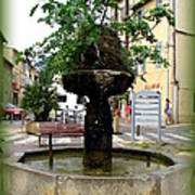 Fig Tree Fountain In Cassis Art Print