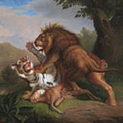 Fight Of A Lion With A Tige Art Print