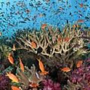 Fiji Reef Riot Art Print