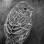 Finch Black And White Art Print