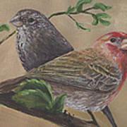 Finch Delights Art Print