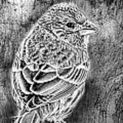 Finch Grungy Black And White Art Print