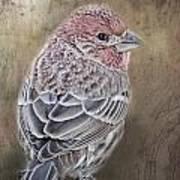 Finch Low Saturation Art Print