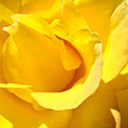 Fine Art Prints Yellow Rose Flower Art Print