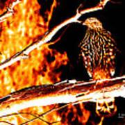 Fire Hawk 0112 Art Print