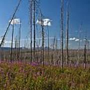 Fireweed  Epilobium Angustifolium Glacier National Park Usa -1 Art Print
