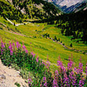 Fireweed In Henson Creek Drainage Art Print