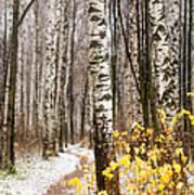 First Snow. Hidden Path Art Print