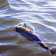Fish In The Water Art Print