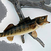 Fish Mount Set 02 Bb Art Print