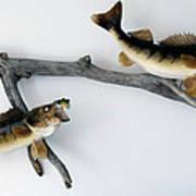 Fish Mount Set 03 A Art Print