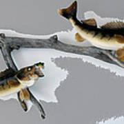 Fish Mount Set 03 C Art Print