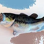 Fish Mount Set 07 B Art Print