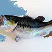 Fish Mount Set 07 C Art Print