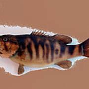 Fish Mount Set 11 B Art Print